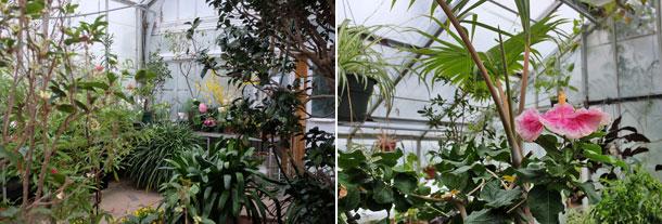 GreenhouseBlooms