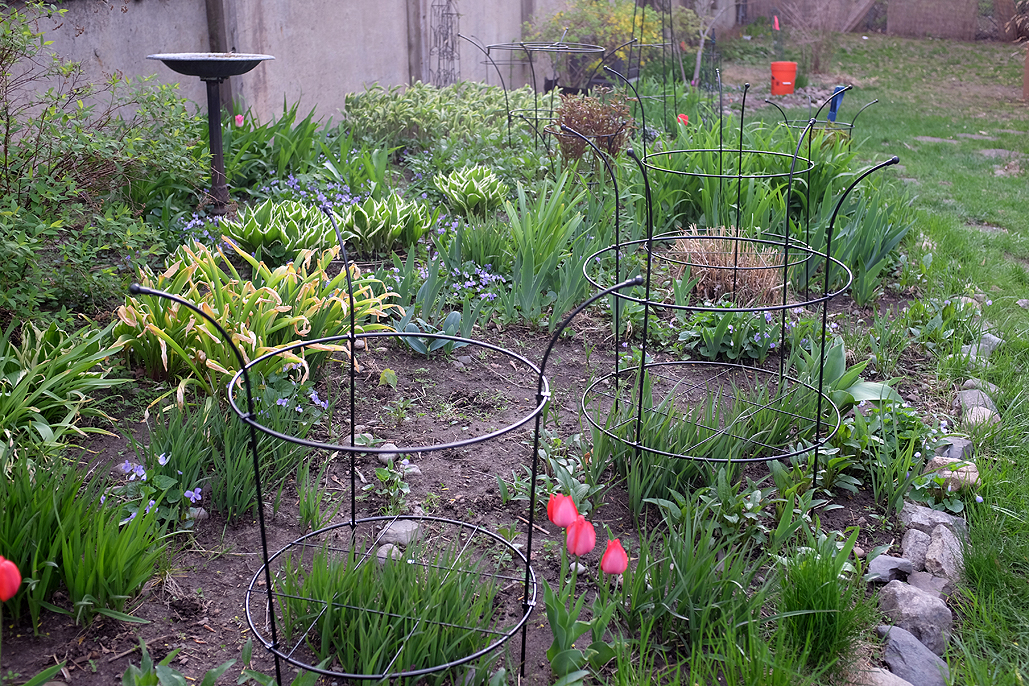 ... Supports Installed In The RainyDayGarden And Are Eager To See How The  Plants Will Look Once They Have Grown Into Them. Those Interested Should  Check ...