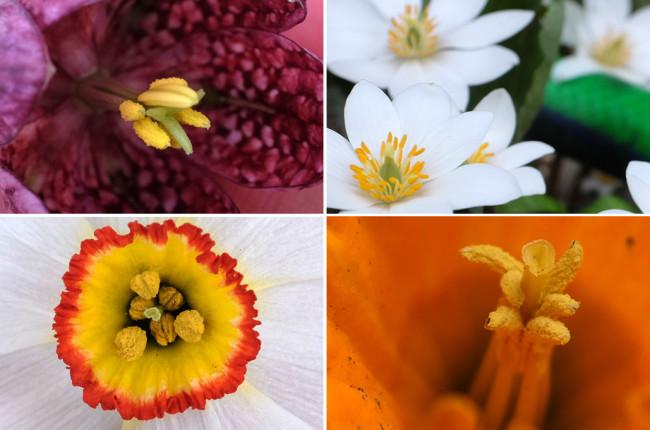 Blooms_Closeup