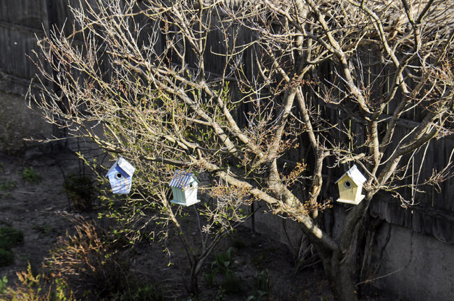 Birdhouses_All